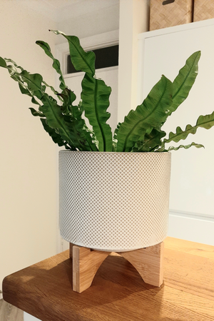 Large Textured Plant Pot on Wooden Stand